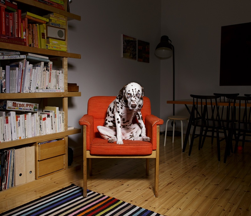 Alma, Helsinki, from the series 'One-Dog Policy' 2015, edition of 5 + 2 ap, 25 x 29 cm, digital c-print, silisec mounted