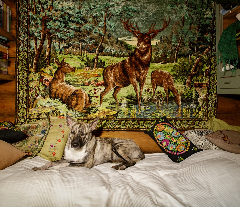 Bambi, Karjalohja, from the series 'One-Dog Policy' 2014, edition of 5 + 2 ap, 25 x 29 cm digital c-print, silisec mounted