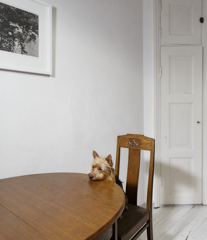 Neko, Helsinki, from the series 'One-Dog Policy' 2015, edition of 5 + 2 ap 25 x 29 cm, digital c-print, silisec mounted